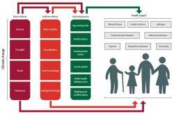 Figure-2-Lancet-2015